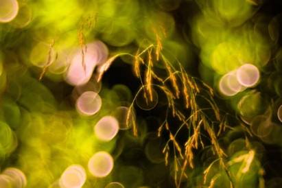 Petzval Lens shot of summer grass